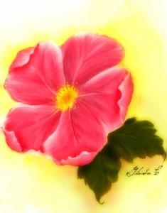 Virginia_Rose-Soft
