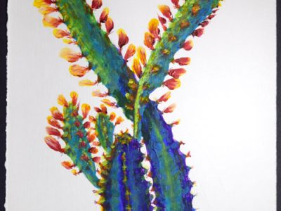 Euphorbia trigona Red